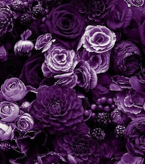 purple flowers, sgs and wallpaper