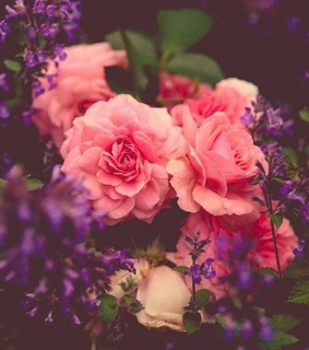 flower, pink and purple