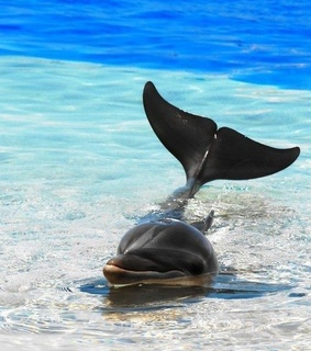 dolphins, beach and animals