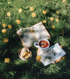 picnic, fairy and dandelions
