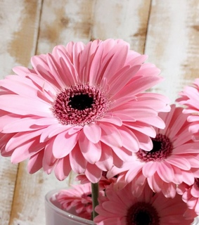 pink, floral and summer