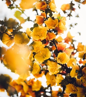 yellow, flowers and nature