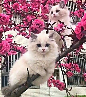 kitty, tumblr and flowers
