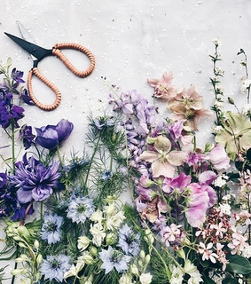 flower, wildflowers and flat lay