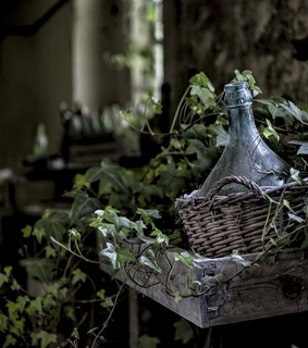 ivy, old and haunted