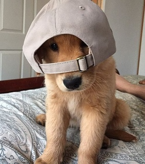 hat, puppy and baseball