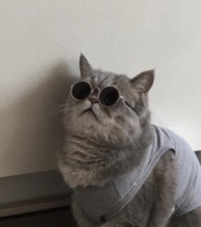 cat, cool and soft grunge