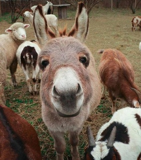 donkey, cute and nature