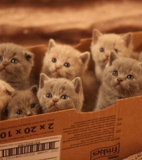 adorable, animals and box