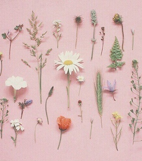 background, pastel and flowers