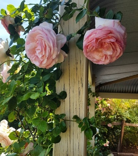 shabby chic, flowers and summer