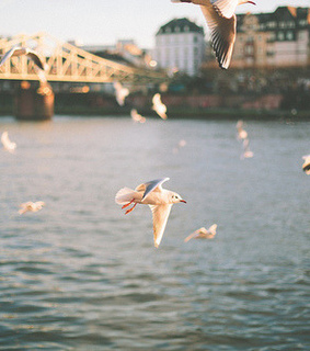 beautiul, birds and fly
