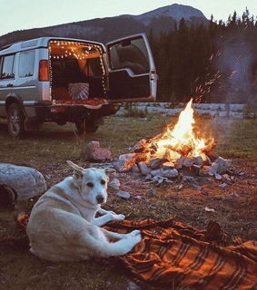 camp, dog recreation and hippie