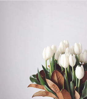 spring, flower and white tulip