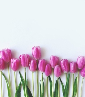 spring, pink tulips and flower