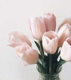 blush, blush color and pink tulips