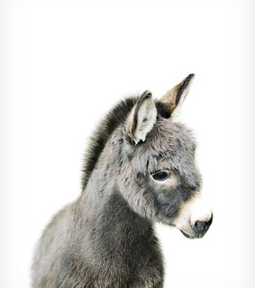 cute, donkey and animals