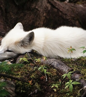 animals, cute and nature