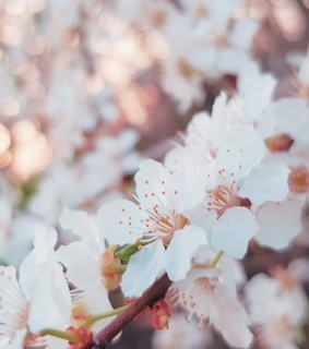 background, blossom and flowers