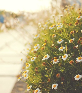 flower, photography and ًورد