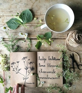 book, garden and greenery