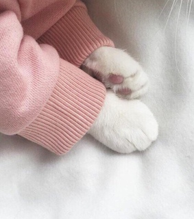 aesthetic, pink paws and minimal