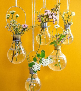 greenhouse, inspiration and house plant