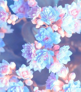 blue, cute and flowers