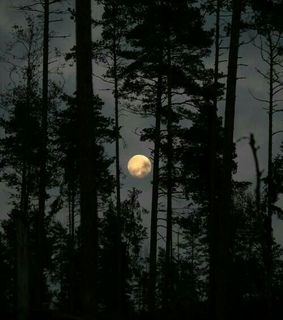 luz, moon and bosques
