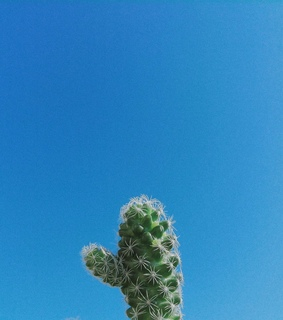 blue, cactus and green