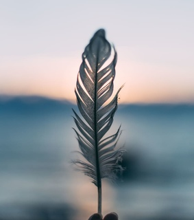 nature, photography and feather