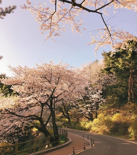 asia, cherry blossoms and nature