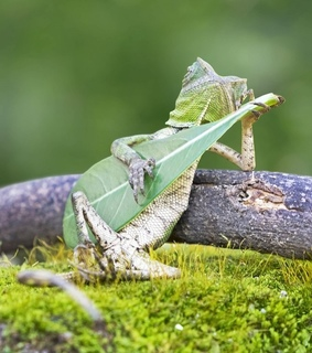 animal, chilling and funny