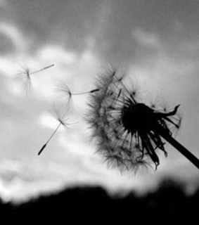 photography, black and nature