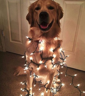 fairy lights, cute and doggo