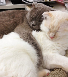 cat, couple and cute