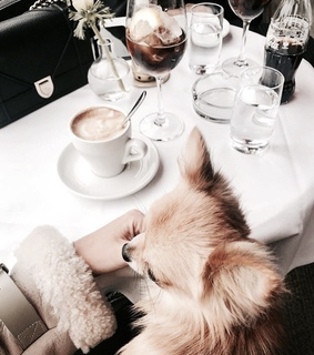 dog, we heart it and style