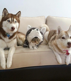 meow, lauflo and dog