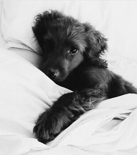 love, puppy and black and white