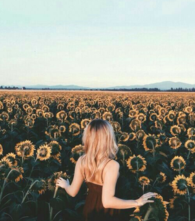 nature, hairs and sunflower field