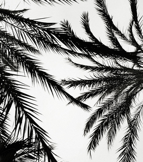 black, black and white and palm