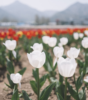 flowers, mountains and nature
