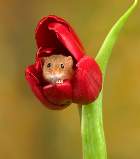 cute animals, tulips and baby animals