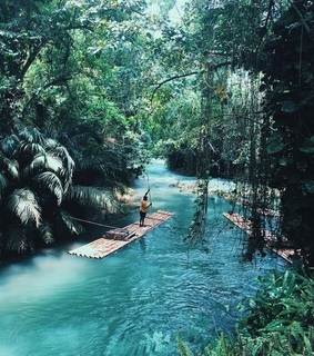 lovely, jungle and paradise