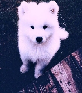 fluffy, white dog and filter