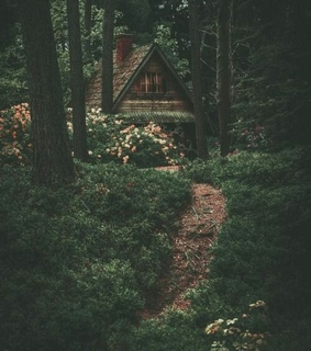 woods, green and cabin