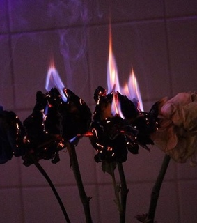 aesthetic, bouquet and burn
