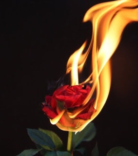 on, roses and fire