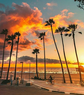 palms, santa monica and california