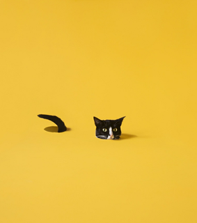 cat theme, yellow themes and theme